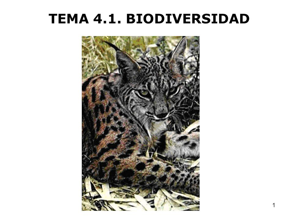 TEMA 4.1. BIODIVERSIDAD