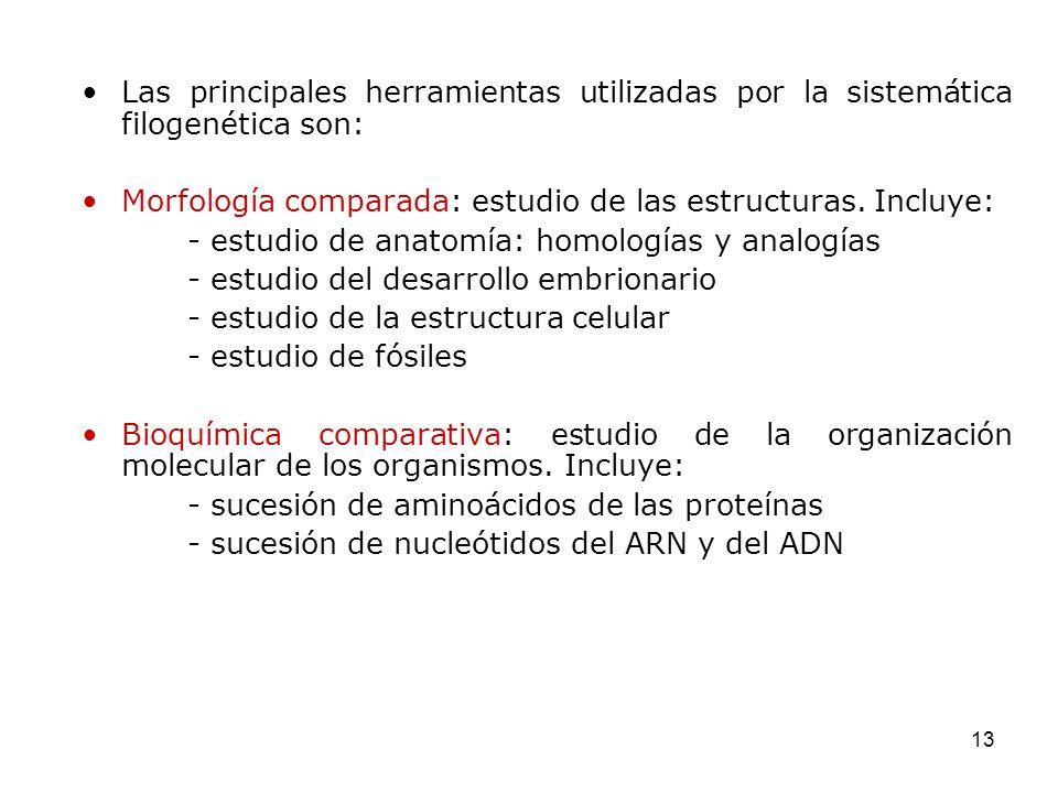 Las principales herramientas utilizadas por la sistemática filogenética son: