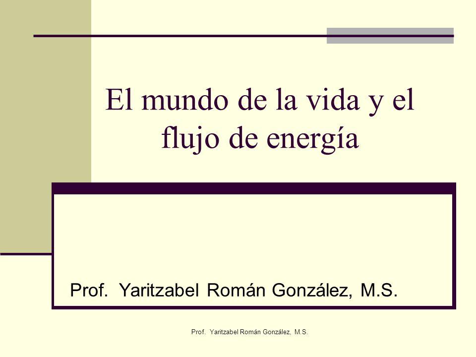 El mundo de la vida y el flujo de energía