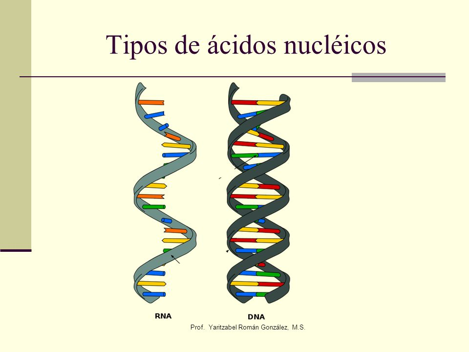 Tipos de ácidos nucléicos