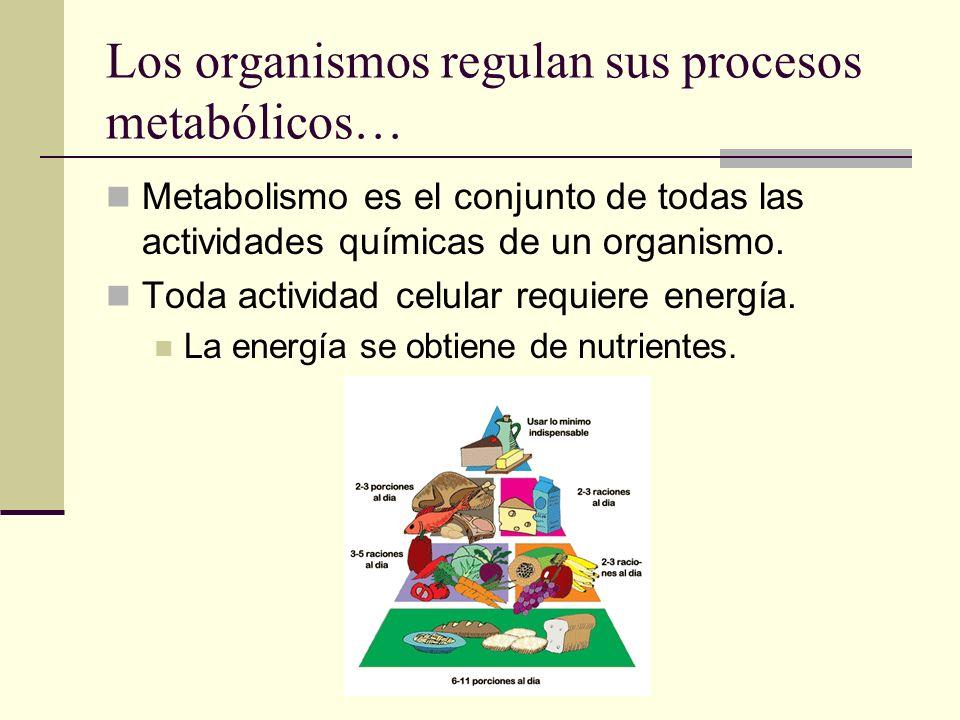 Los organismos regulan sus procesos metabólicos…
