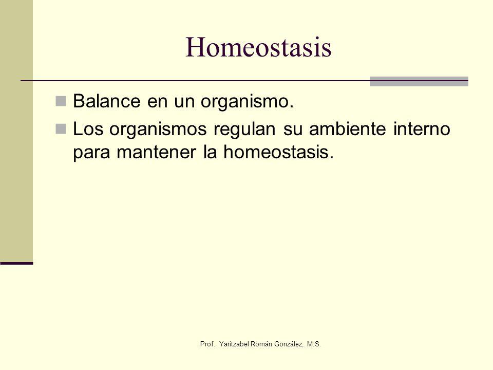 Prof. Yaritzabel Román González, M.S.