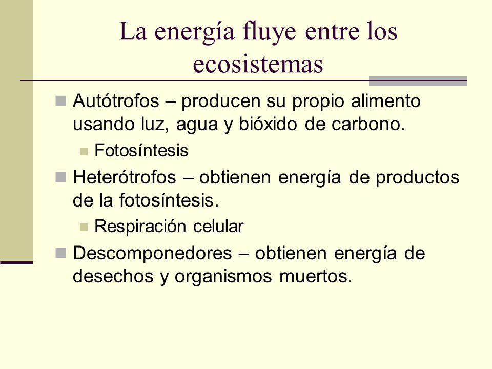 La energía fluye entre los ecosistemas