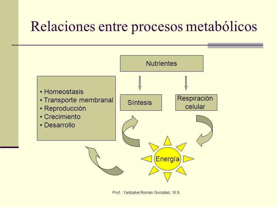 Relaciones entre procesos metabólicos