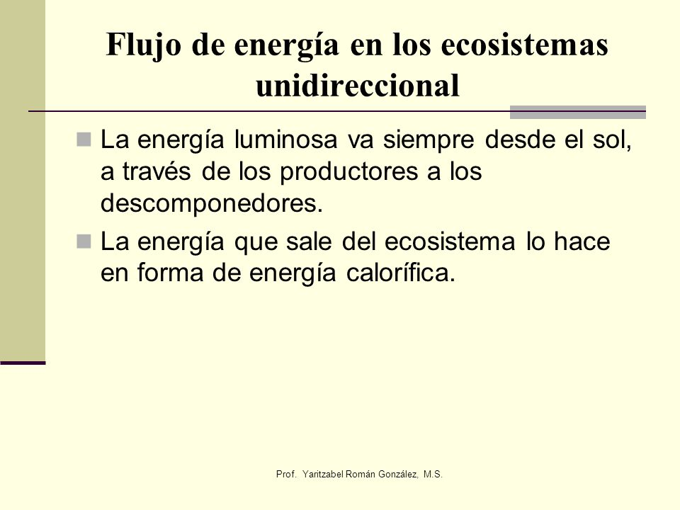 Flujo de energía en los ecosistemas unidireccional