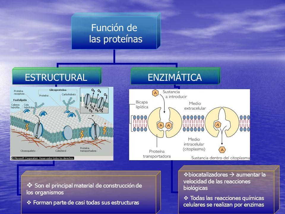 Son el principal material de construcción de los organismos