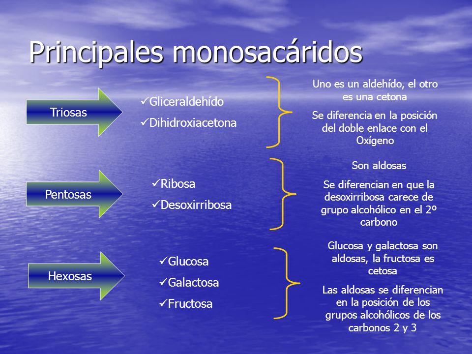 Principales monosacáridos