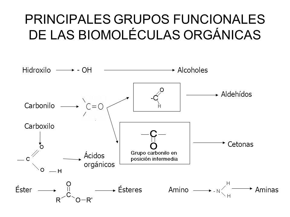 PRINCIPALES GRUPOS FUNCIONALES DE LAS BIOMOLÉCULAS ORGÁNICAS