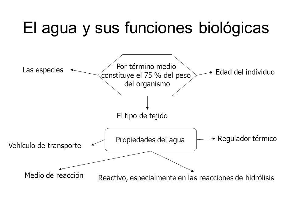 El agua y sus funciones biológicas