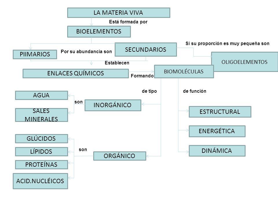 LA MATERIA VIVA BIOELEMENTOS SECUNDARIOS PIIMARIOS ENLACES QUÍMICOS