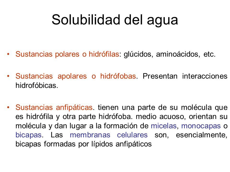 Solubilidad del agua Sustancias polares o hidrófilas: glúcidos, aminoácidos, etc.