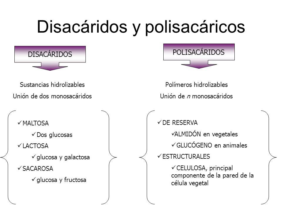 Disacáridos y polisacáricos