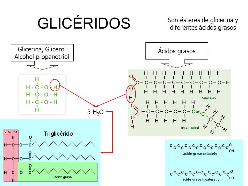 Son ésteres de glicerina y diferentes ácidos grasos