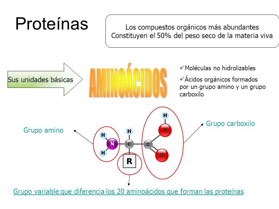 Proteínas AMINOÁCIDOS Los compuestos orgánicos más abundantes
