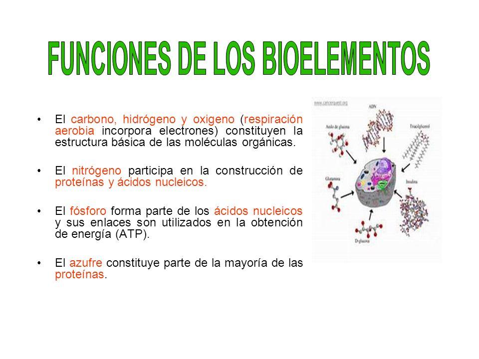 FUNCIONES DE LOS BIOELEMENTOS