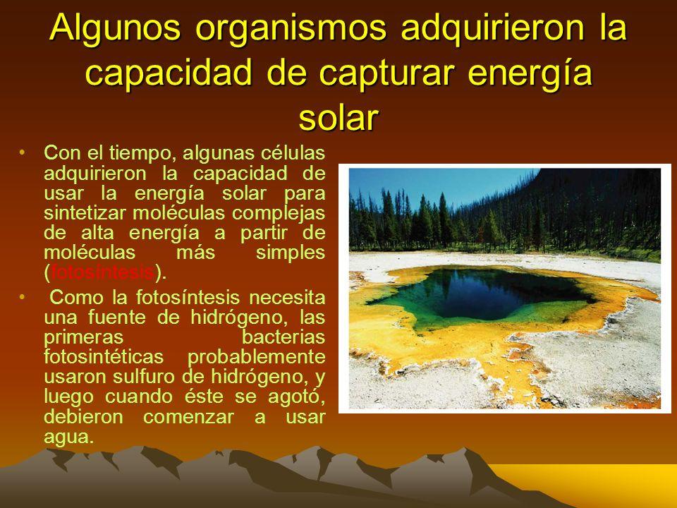 Algunos organismos adquirieron la capacidad de capturar energía solar