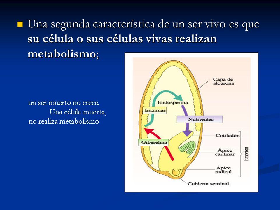 Una célula muerta, no realiza metabolismo