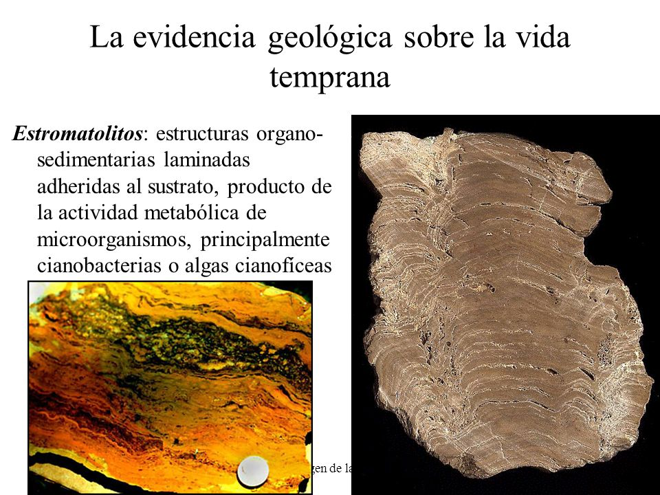 La evidencia geológica sobre la vida temprana