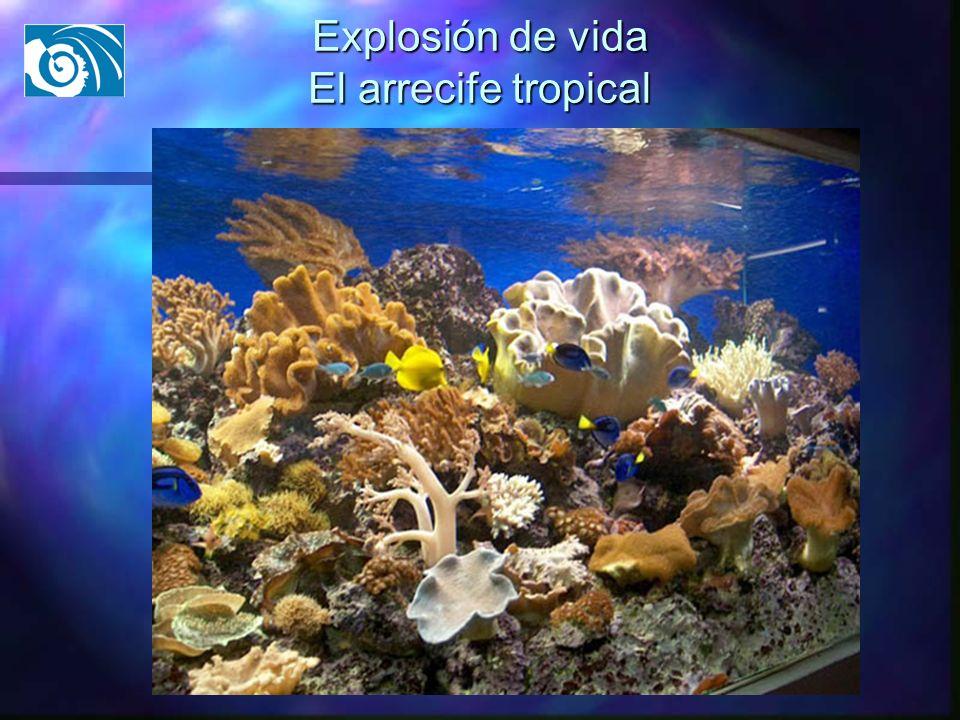 Explosión de vida El arrecife tropical
