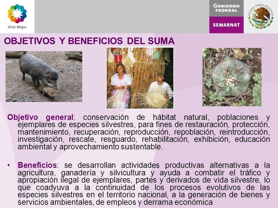 OBJETIVOS Y BENEFICIOS DEL SUMA