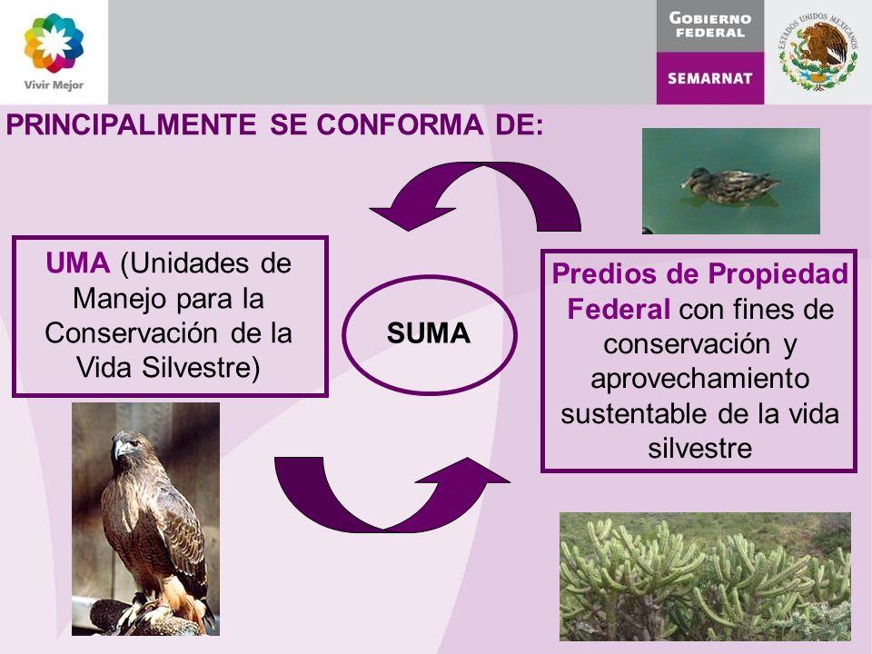 UMA (Unidades de Manejo para la Conservación de la Vida Silvestre)