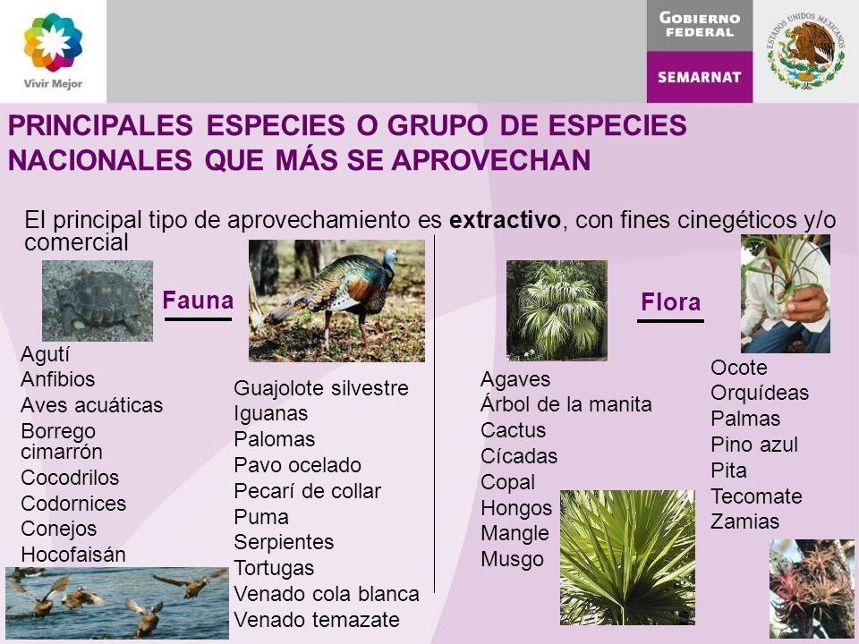 PRINCIPALES ESPECIES O GRUPO DE ESPECIES NACIONALES QUE MÁS SE APROVECHAN