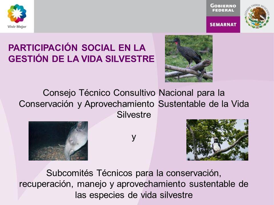 PARTICIPACIÓN SOCIAL EN LA