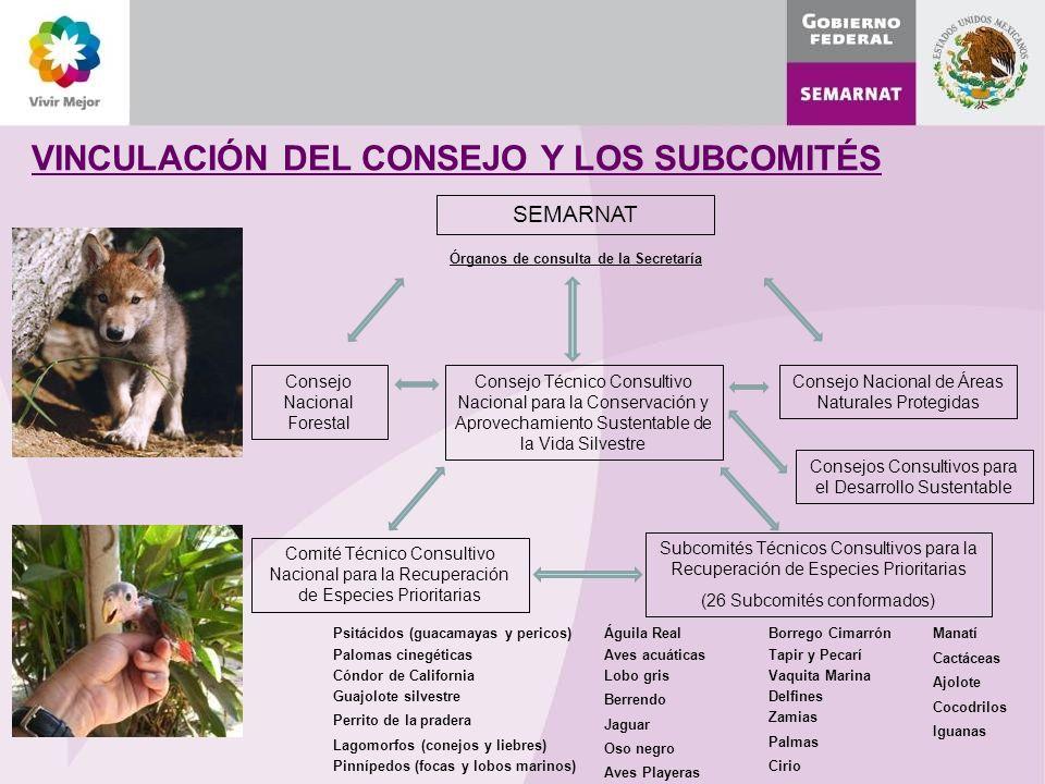 VINCULACIÓN DEL CONSEJO Y LOS SUBCOMITÉS