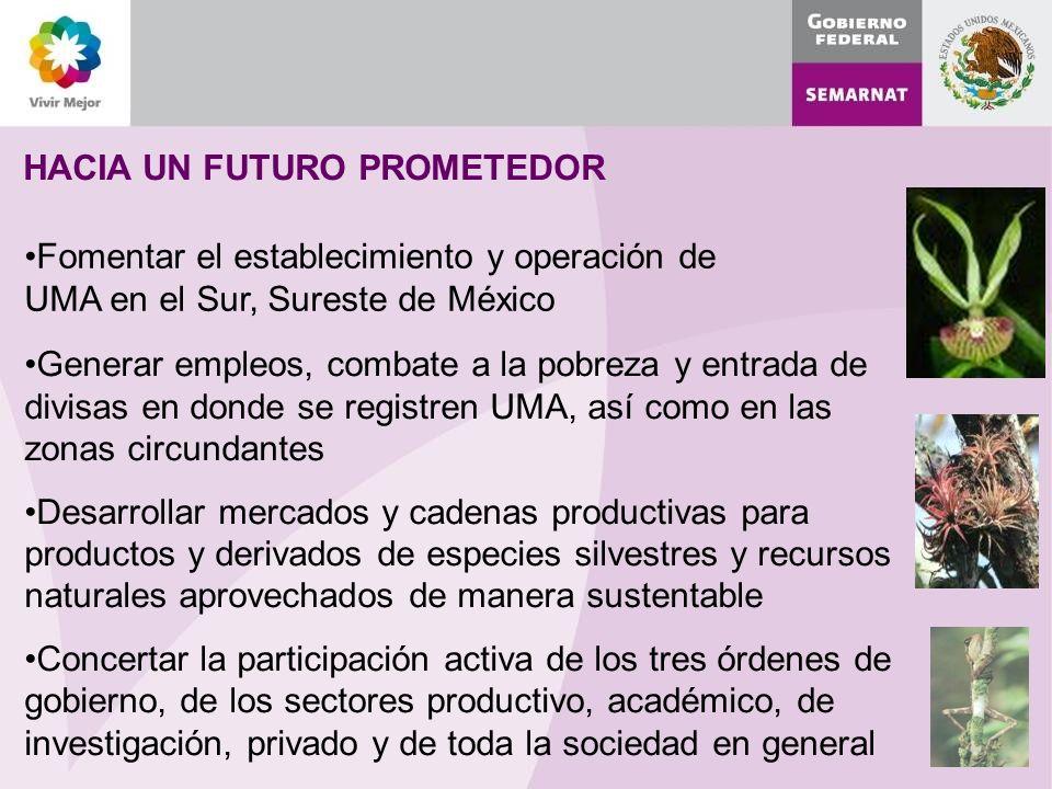 HACIA UN FUTURO PROMETEDOR