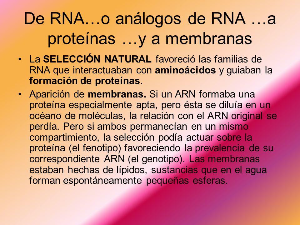 De RNA…o análogos de RNA …a proteínas …y a membranas