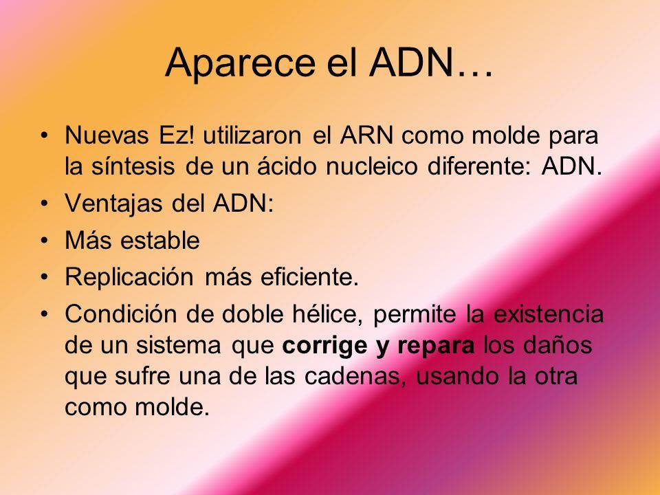 Aparece el ADN… Nuevas Ez! utilizaron el ARN como molde para la síntesis de un ácido nucleico diferente: ADN.