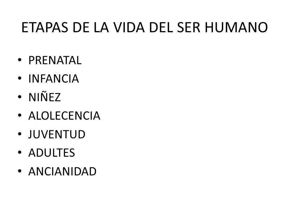 ETAPAS DE LA VIDA DEL SER HUMANO