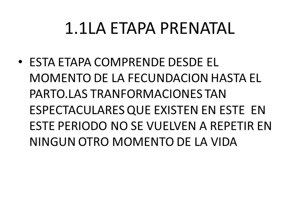1.1LA ETAPA PRENATAL