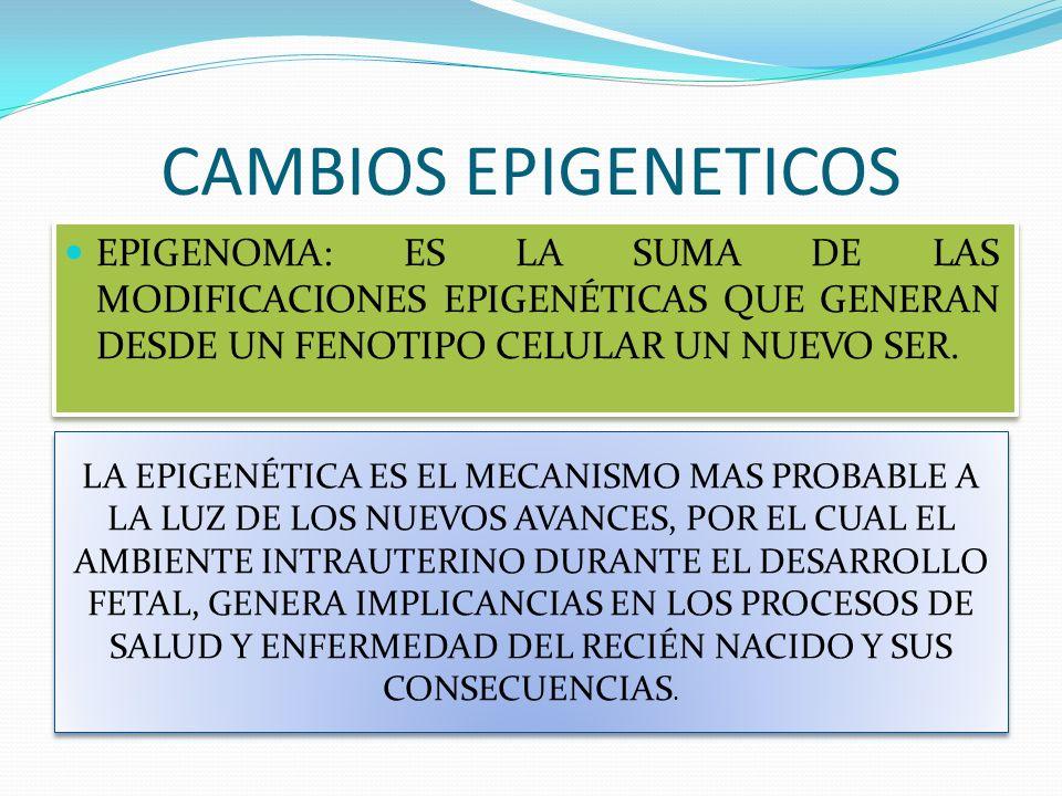 CAMBIOS EPIGENETICOS EPIGENOMA: ES LA SUMA DE LAS MODIFICACIONES EPIGENÉTICAS QUE GENERAN DESDE UN FENOTIPO CELULAR UN NUEVO SER.