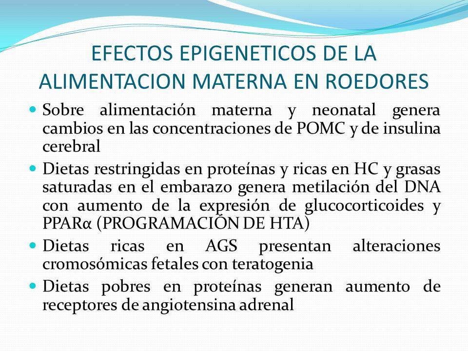 EFECTOS EPIGENETICOS DE LA ALIMENTACION MATERNA EN ROEDORES
