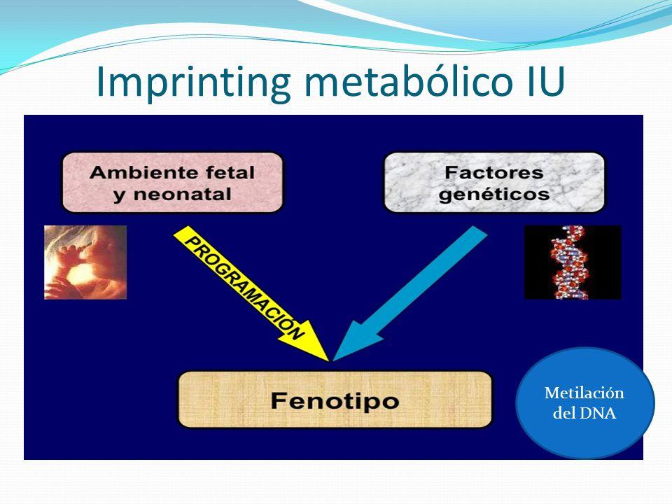 Imprinting metabólico IU