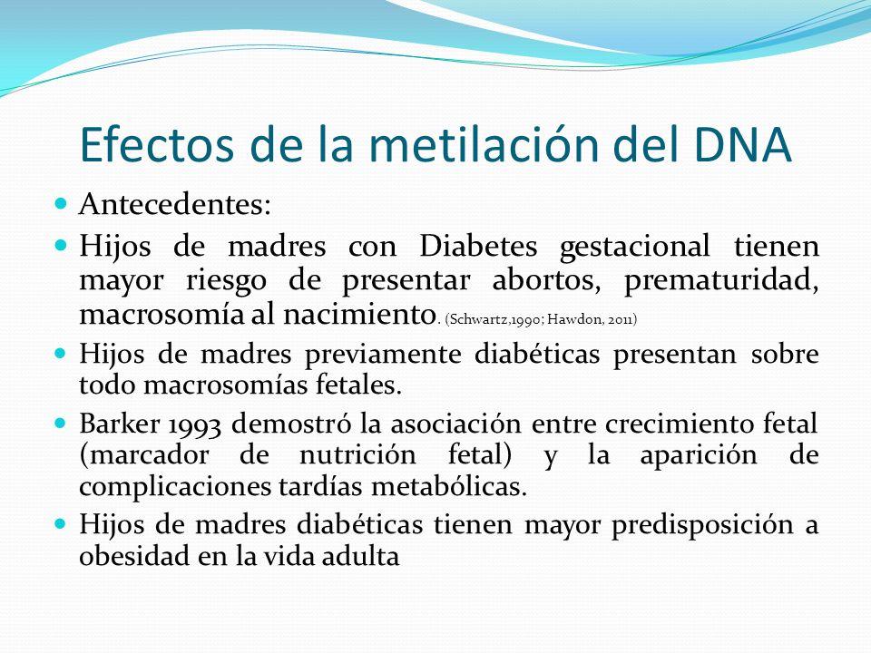 Efectos de la metilación del DNA