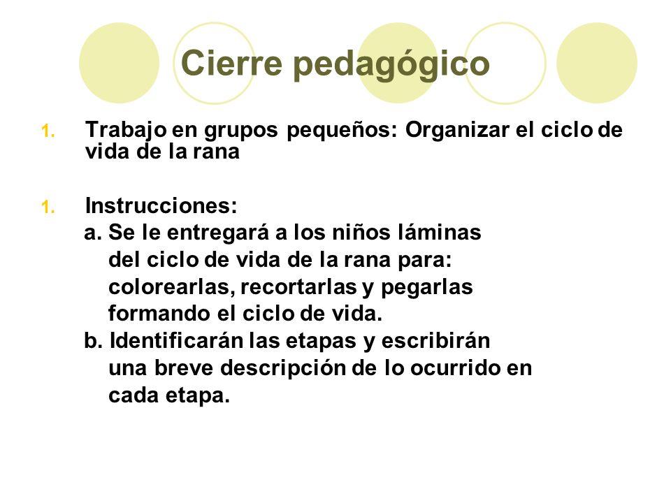 Cierre pedagógico Trabajo en grupos pequeños: Organizar el ciclo de vida de la rana. Instrucciones: