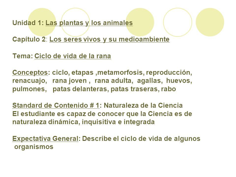 Unidad 1: Las plantas y los animales Capítulo 2: Los seres vivos y su medioambiente Tema: Ciclo de vida de la rana Conceptos: ciclo, etapas ,metamorfosis, reproducción, renacuajo, rana joven , rana adulta, agallas, huevos, pulmones, patas delanteras, patas traseras, rabo Standard de Contenido # 1: Naturaleza de la Ciencia El estudiante es capaz de conocer que la Ciencia es de naturaleza dinámica, inquisitiva e integrada Expectativa General: Describe el ciclo de vida de algunos organismos