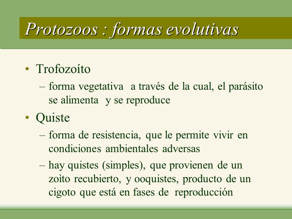 Protozoos : formas evolutivas