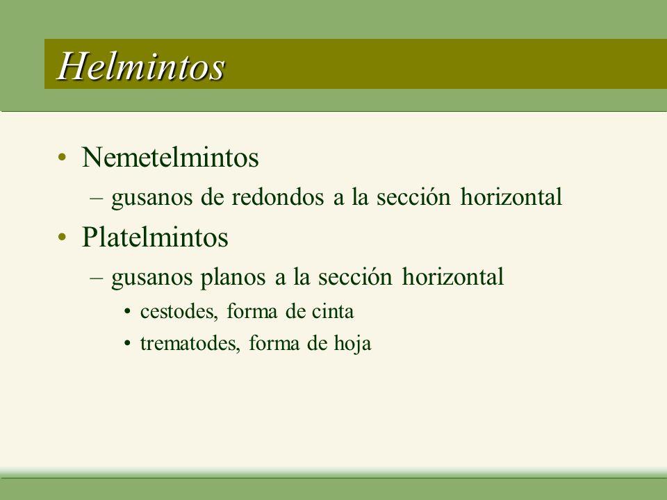 Helmintos Nemetelmintos Platelmintos
