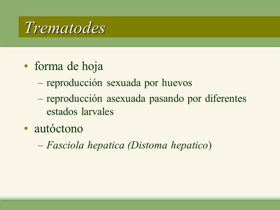 Trematodes forma de hoja autóctono reproducción sexuada por huevos