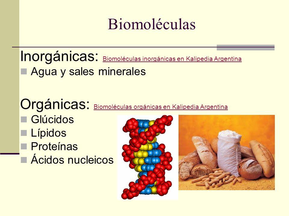 Biomoléculas Inorgánicas: Biomoléculas inorgánicas en Kalipedia Argentina. Agua y sales minerales.