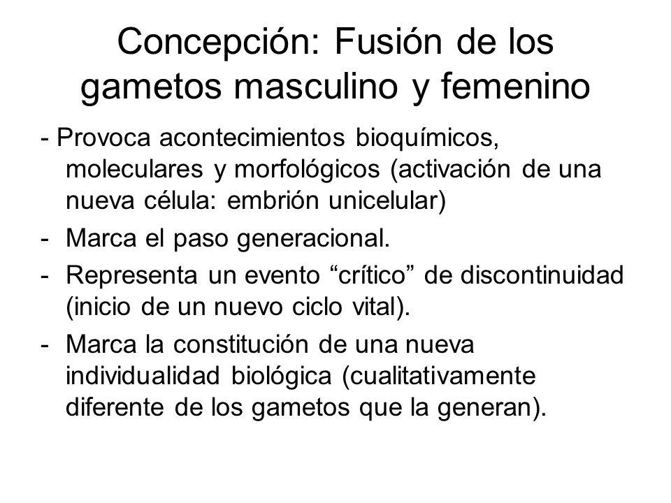 Concepción: Fusión de los gametos masculino y femenino