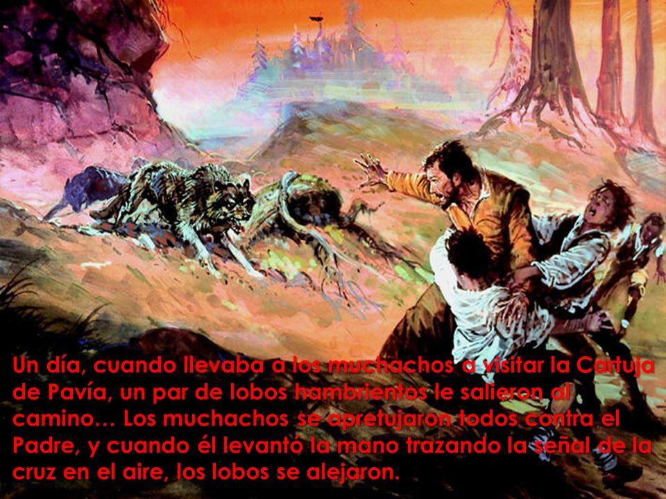 Un día, cuando llevaba a los muchachos a visitar la Cartuja de Pavía, un par de lobos hambrientos le salieron al camino… Los muchachos se apretujaron todos contra el Padre, y cuando él levantó la mano trazando la señal de la cruz en el aire, los lobos se alejaron.