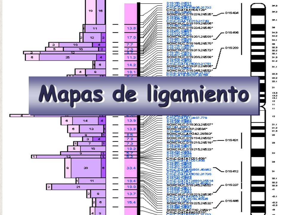Mapas de ligamiento
