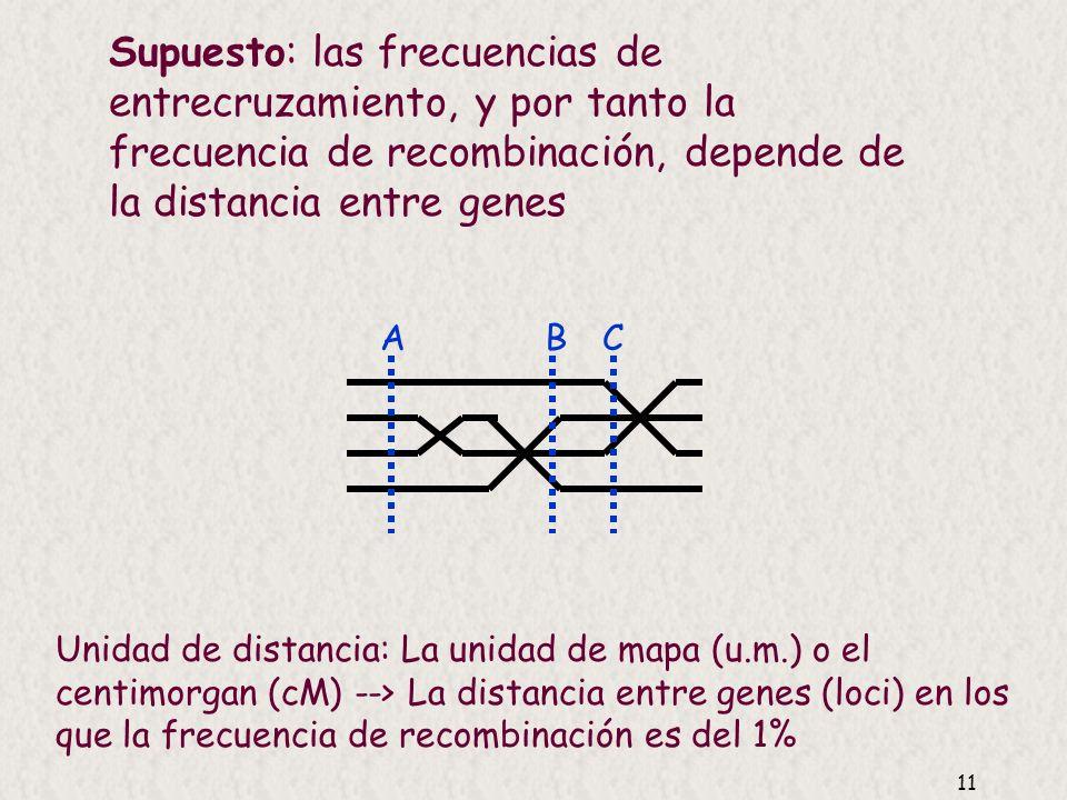 Supuesto: las frecuencias de entrecruzamiento, y por tanto la frecuencia de recombinación, depende de la distancia entre genes