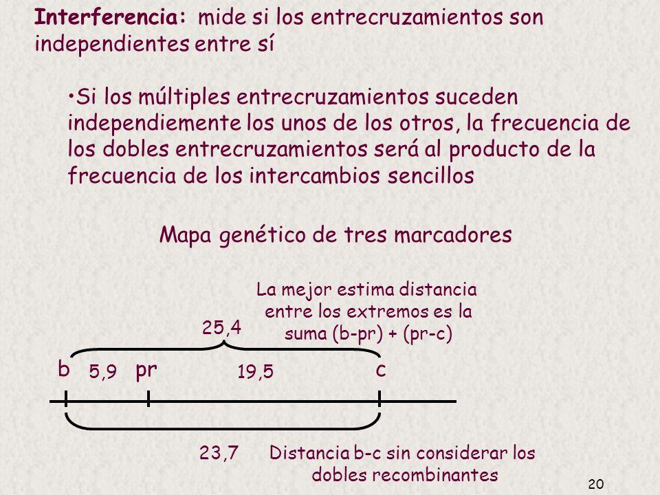 Mapa genético de tres marcadores