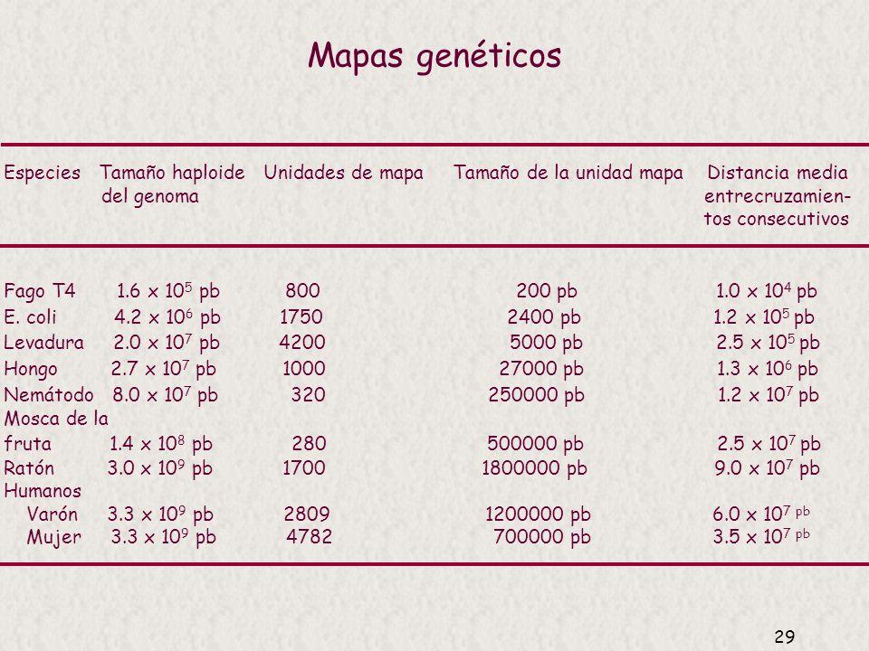 Mapas genéticos Especies Tamaño haploide Unidades de mapa Tamaño de la unidad mapa Distancia media.