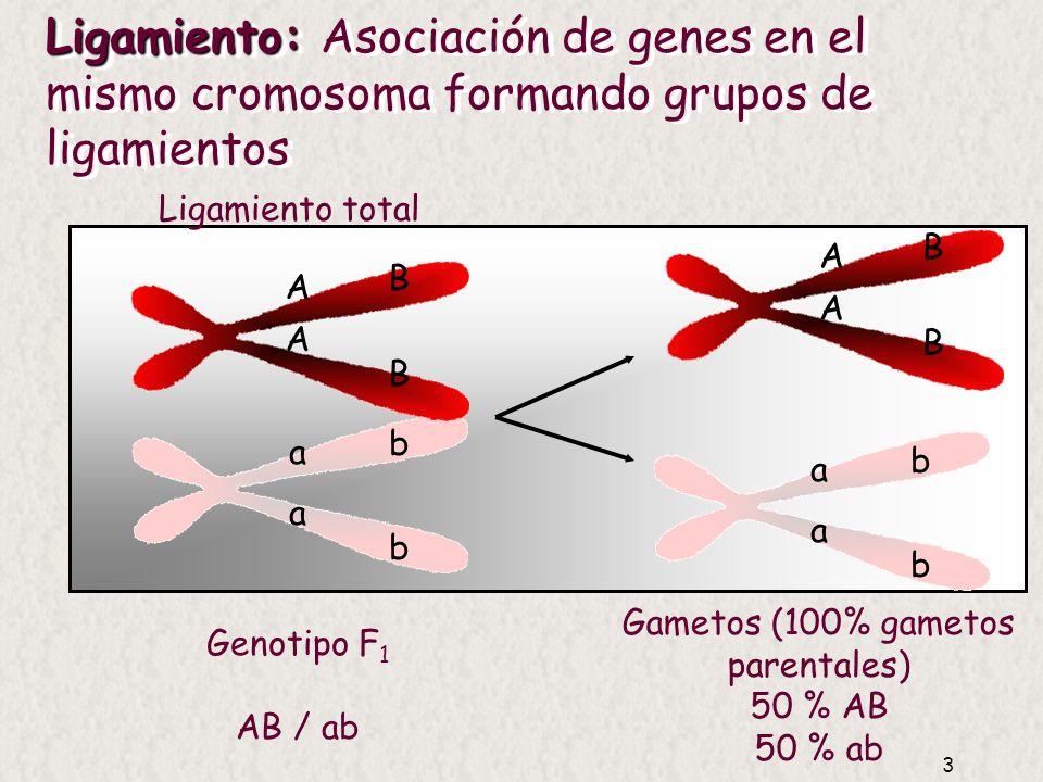 Gametos (100% gametos parentales)